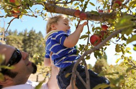 Apple Picking + Feature