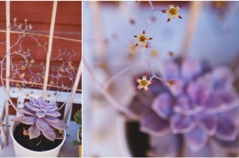 Taking Stock + April Diptychs